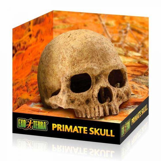 ExoTerra Primate Skull large 17x13,5x11