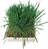 Stud muffins 3pk 80gr