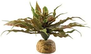 Exo Terra Desert Plant