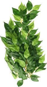 Exo terra Ficus M