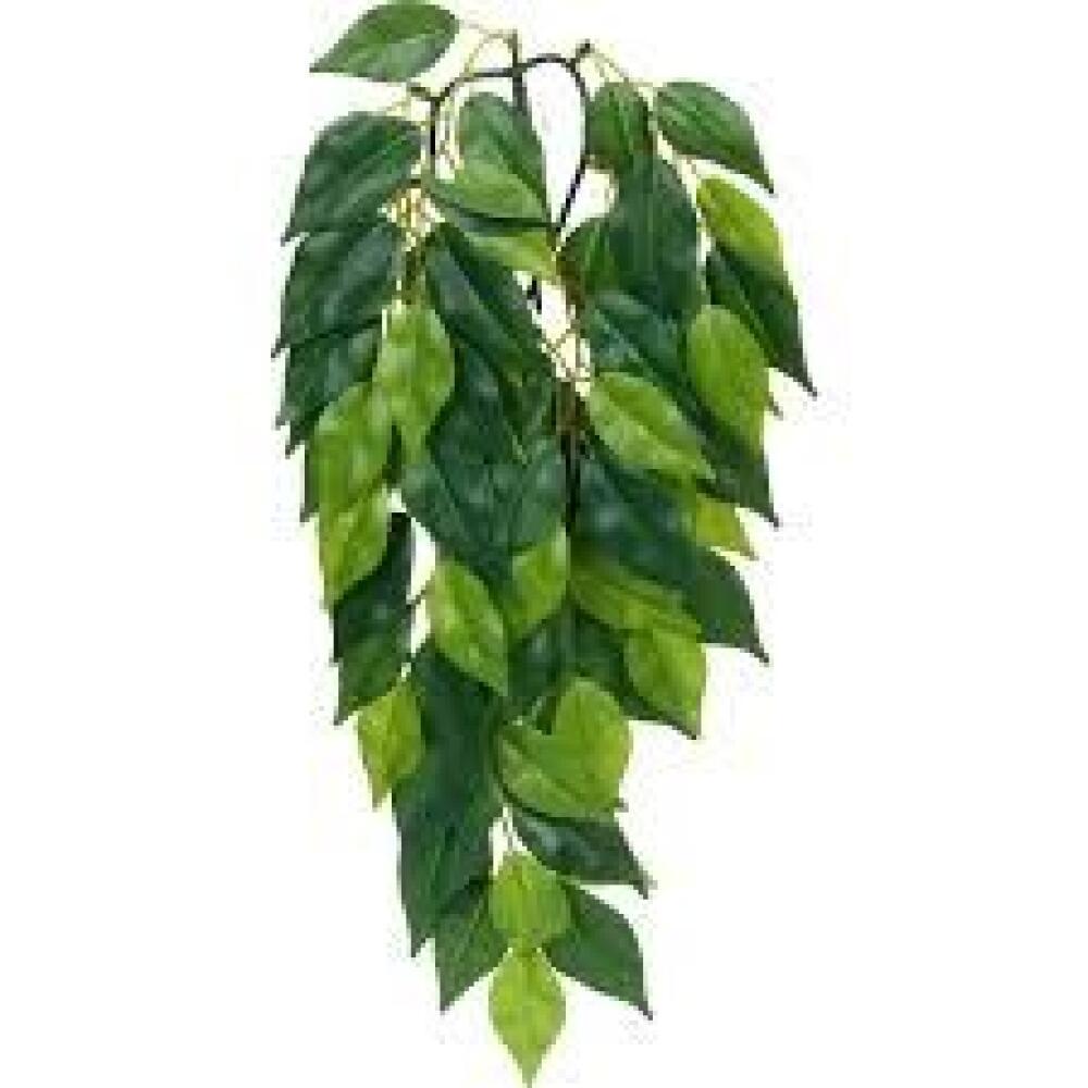 Exo Terra Ficus L