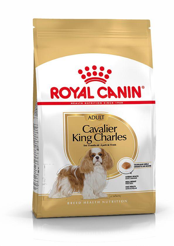 Cavalier King Charles 7,5kg