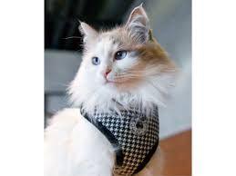 Catspia Garbo harness black/white M