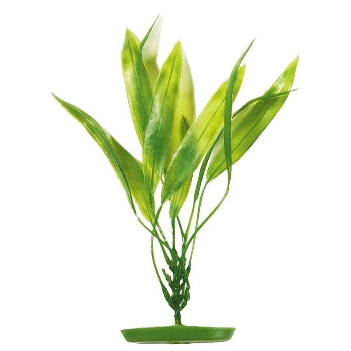 Plastplante amazon sverdplante 20cm
