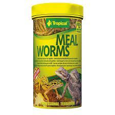 TROPICAL MEALWORMS 250ML / 30G