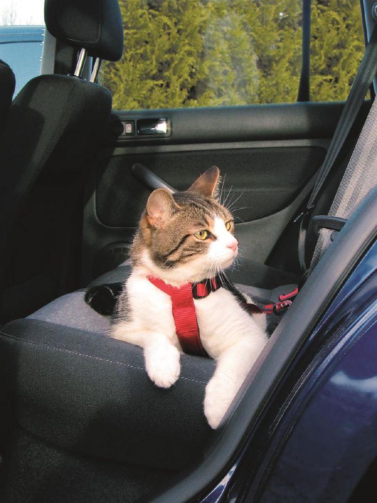 Trixie Sikkerhetsele For Katt 20-50cm